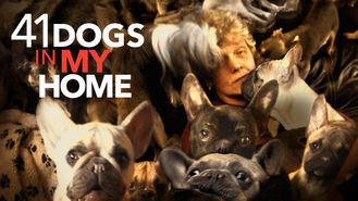 Netflix box art for 41 Dogs in My Home